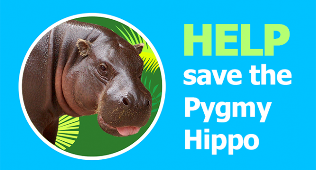 Help Save the Pygmy Hippo