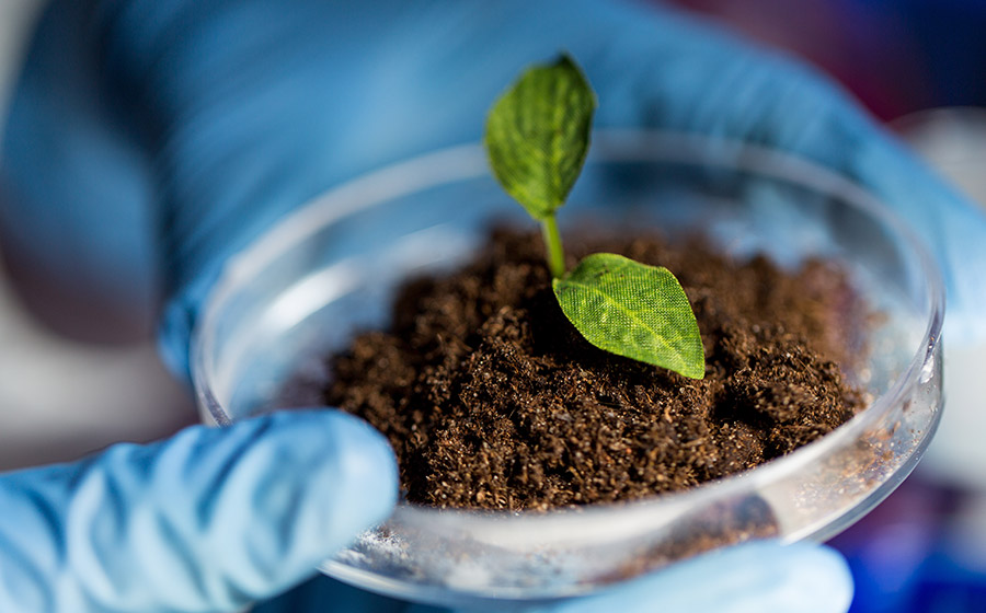 Close up of hands with plant and soil in lab.