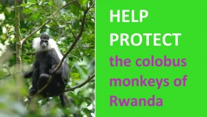 Help protect the colobus monkeys